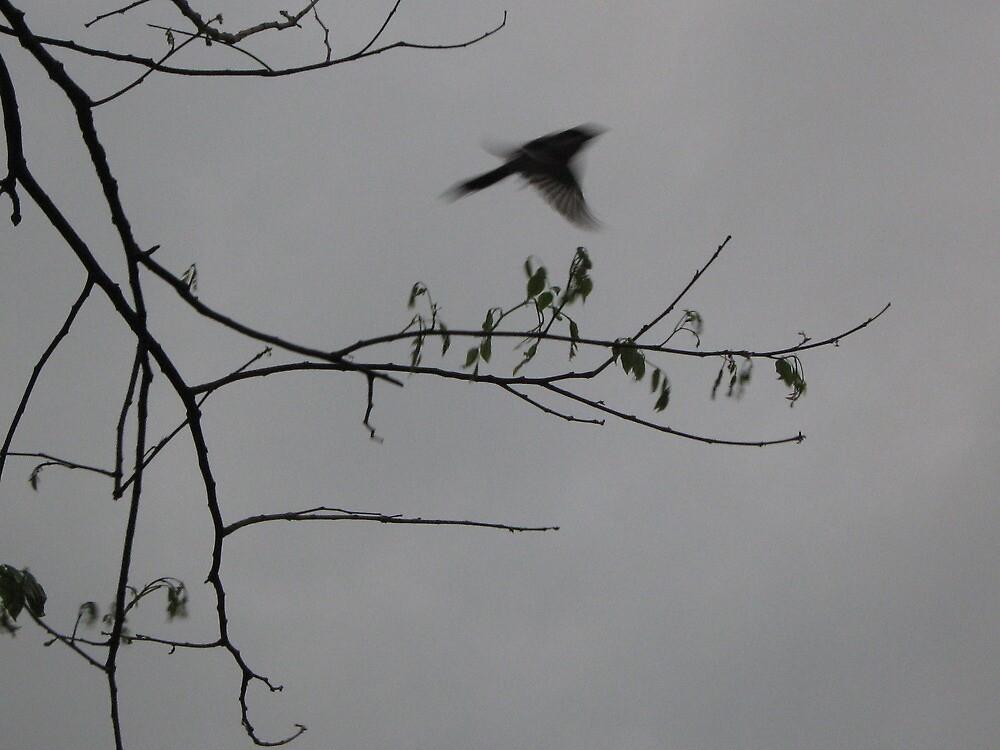 Fly Away by crazybeakz