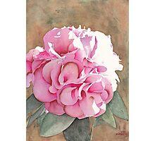 Pink Azalea Photographic Print