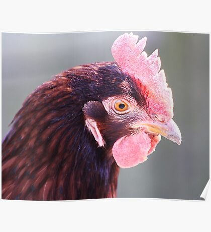 Pink Rooster Poster