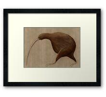 Its a Kiwi Framed Print