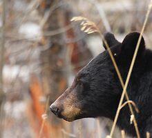 Mother Black Bear by J. L. Gould
