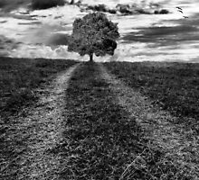 A lonely tree by kamilelesk