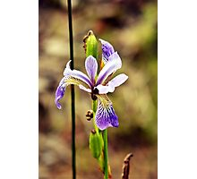 Wildflower by the Lake Photographic Print