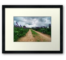 Lupin Path Framed Print
