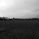 Klaten Rice Fields by AainaA
