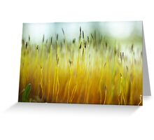 Moss Sprigs Greeting Card