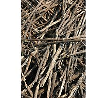 stack of firewood Photographic Print