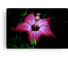 Deep Red Habiscus Flower Canvas Print