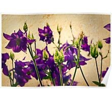 Purple flowers with texture Poster
