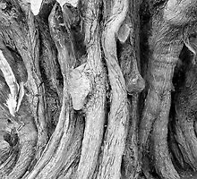 gnarled (also gnarly) . adj. knobbly, rough and twisted  by Martin Rolt