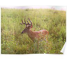 Deer at Cades Cove 001 Poster