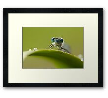 Big blue eyes Framed Print