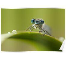Big blue eyes Poster