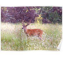 Deer at Cades Cove 004 Poster