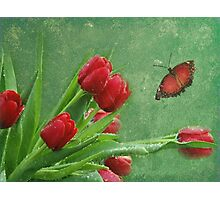 Ruby Red Photographic Print