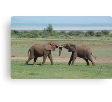 Elephant Fight Canvas Print