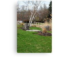 Birch tree 2 Canvas Print