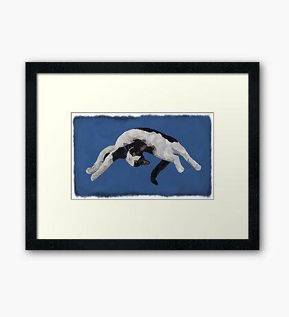 Zorro is watching - Blue Framed Print