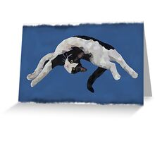 Zorro is watching - Blue Greeting Card