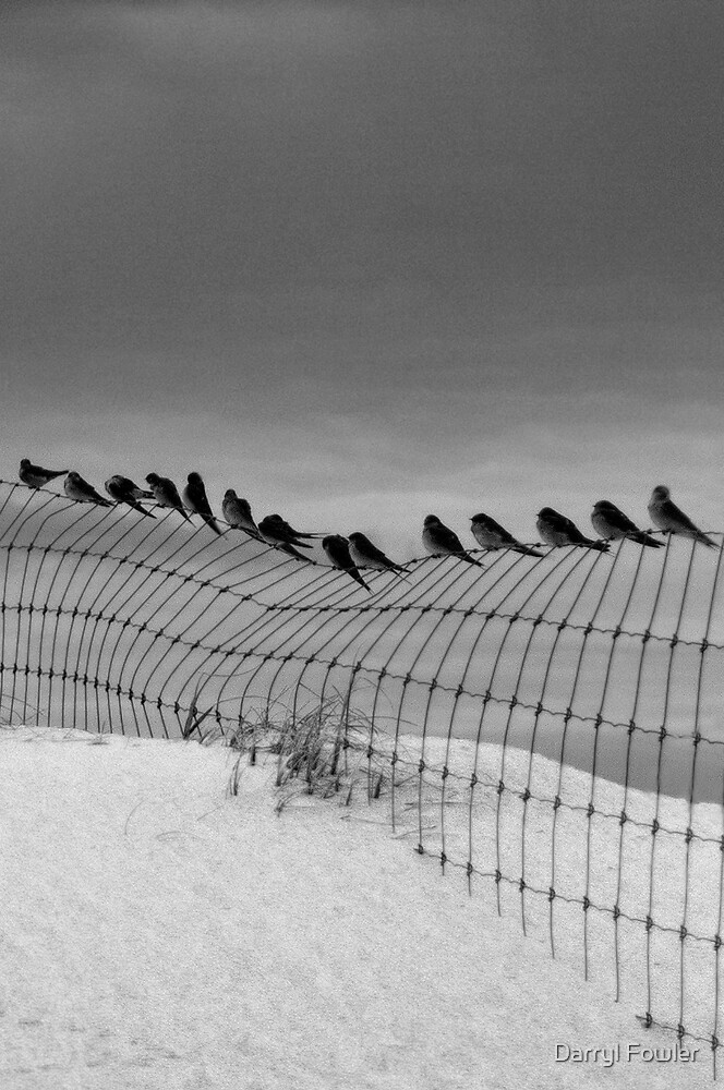 Birds on a Wire,Great Ocean Road. by Darryl Fowler