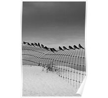 Birds on a Wire,Great Ocean Road. Poster