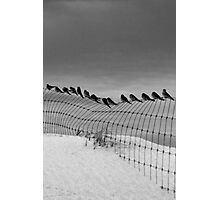Birds on a Wire,Great Ocean Road. Photographic Print