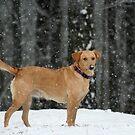 An Alabama Snow by DebbieCHayes