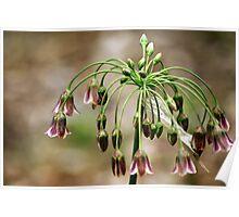 Springtime bells Poster