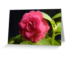 Double Pink Impatience Greeting Card