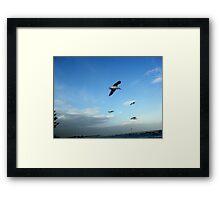Seagulls ~ Altona Beach ~ Victoria Framed Print