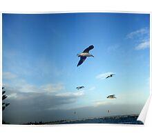 Seagulls ~ Altona Beach ~ Victoria Poster