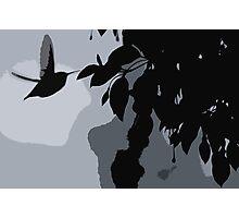 Silhouette Of Hummingbird & Hanging Fushia Plant Photographic Print