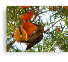 (BFF's) Gila Woodpecker ~ Male Canvas Print