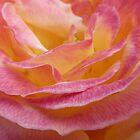 Rose Petal Edges  by clizzio