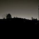 Burnt Black Woods by White Owl