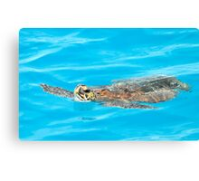 Green Sea Turtle In A World Of Blue Canvas Print
