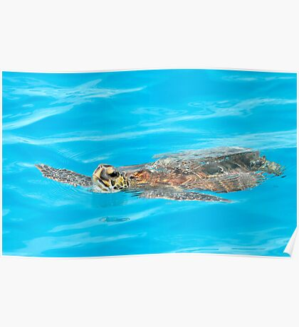 Green Sea Turtle In A World Of Blue Poster