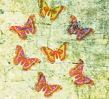 Butterfly Colours by Vitta