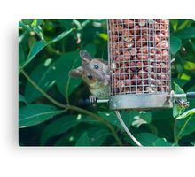 Nutty mouse Canvas Print