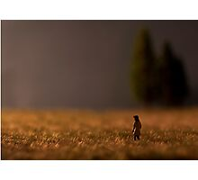 Something's on the Horizon - a girl in a field at dusk Photographic Print