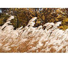 Pampas Crescendo Photographic Print