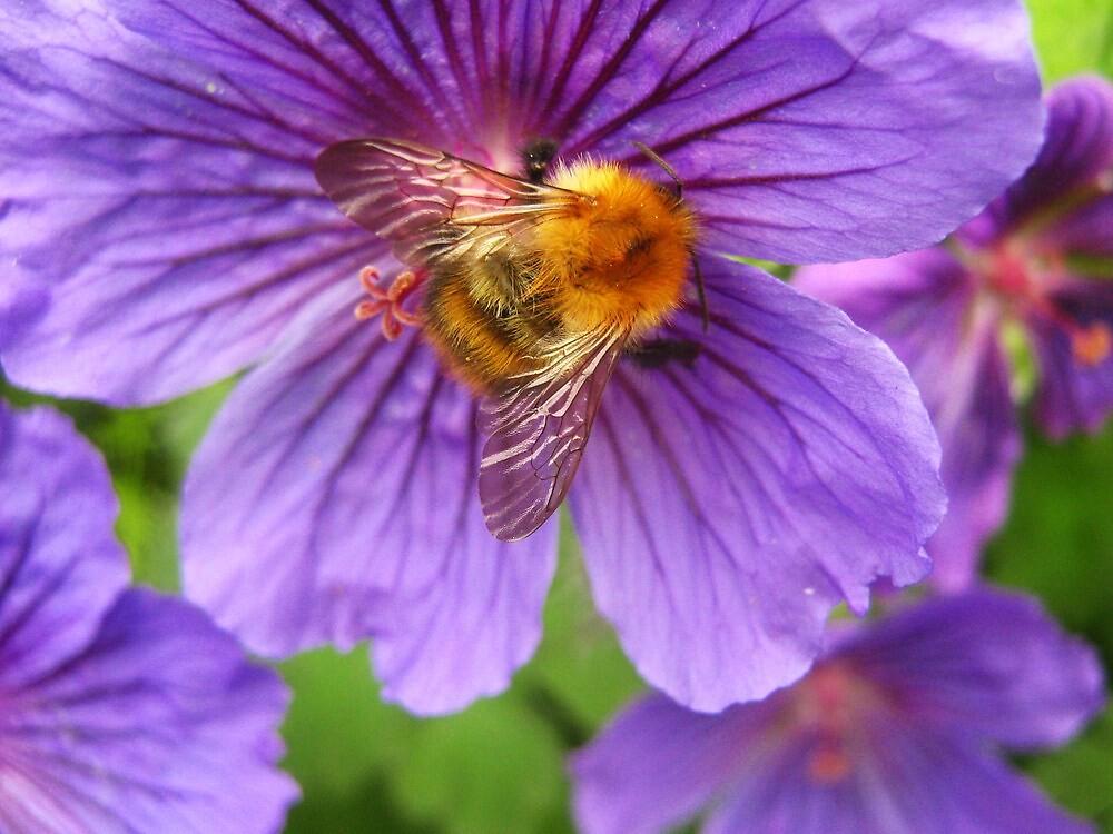 Bee Happy... by Susie Hawkins