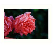 Could it be a faded Rose Art Print