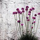 Urban garden by Anne Staub