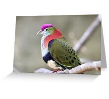 Superb Fruit-dove Greeting Card