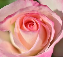 Shades Of Pink Seduction by MissyD
