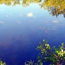 Life in the Lake by Michael Degenhardt