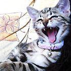 LOL Cat by Ladymoose