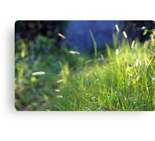 its happy when its green Canvas Print