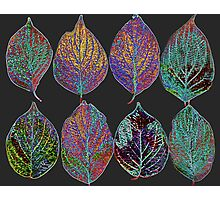 Glowing Pattern of Leaves Photographic Print
